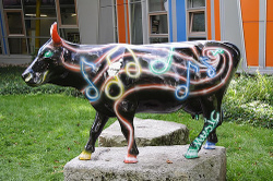 Music_cow